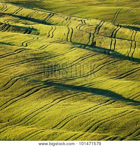 Wheat Field And Tracks Texture Abstract In Summer. Tuscany, Italy