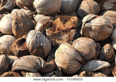 Coconut Hairy Husk Brown
