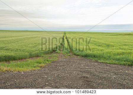 Cloudghy Grain Field