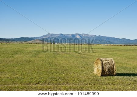Mountain Hay Field