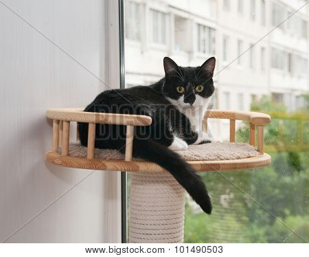 Black And White Cat Lying On Scratching Posts