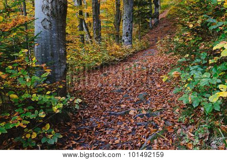 Autumn in the forest. Landscape with footpath. It's a nasty day
