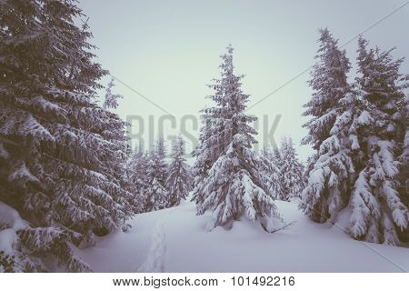 Overcast winter day. Landscape with snowy forest in the mountains. The path in the snow. A Christmas Tale. Color toning. Low contrast