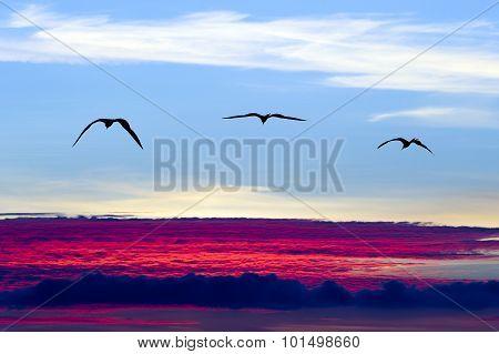 Birds Silhouette Flying