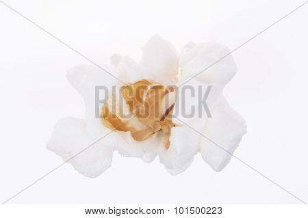 One Popped Kernel Of Popcorn On White Background