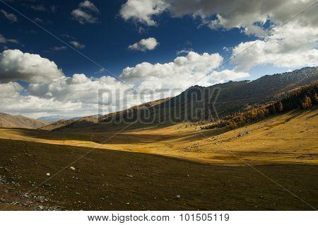 Autumn grassland