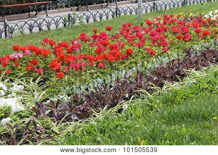 Flowerbed with red flowers