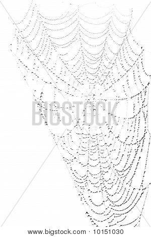 SpiderWeb met Waterdrops op witte achtergrond