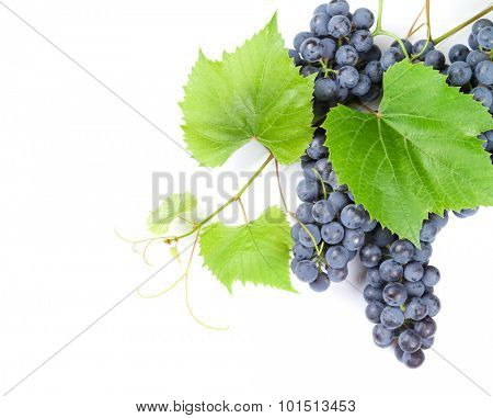 Bunch of red grapes with leaves. Isolated on white background with copy space