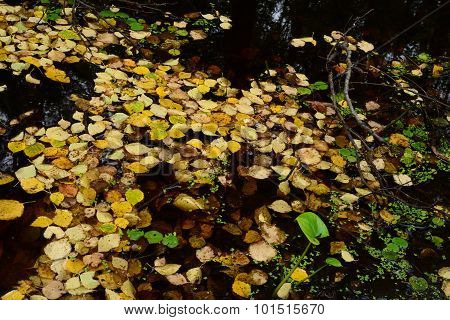 Fall Cover Of Yellow Fallen Leaves On The Water Surface