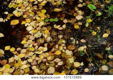 Fallen Leaves On The Water Surface Dragonfly Fall Occurred
