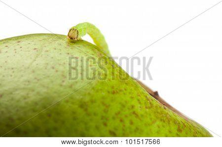 Macro Of Measuring Worm On Pear