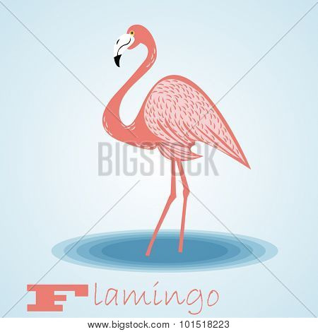 Flamingo.Vector