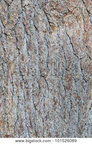 Natural background - bark of conifer
