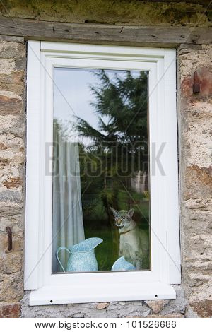 Cat sitting behind the window in France