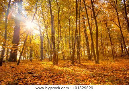 Morning in the Silent Autumn park with sunlight and sunbeams - Beautiful Fall weather