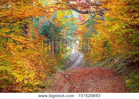 Silent Autumn forest - colorful vibrant leaves and trees, horizontal fall background