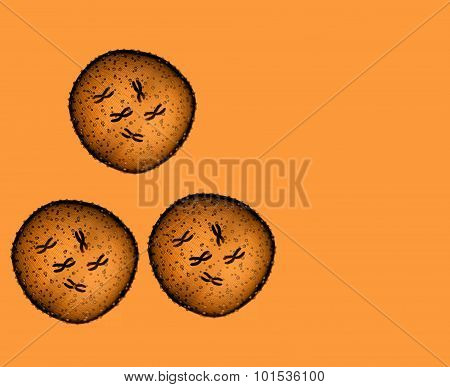 Three Microbe Orange Seen In A Microscope In A Medical Office