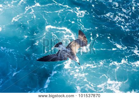 Seagull flying over ferry trail on the sea surface