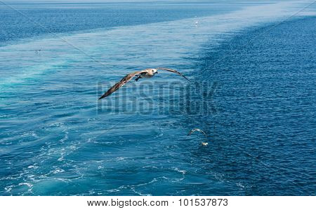 Seagulls flying over the sea with ferry trail on the sea surface