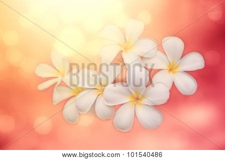 Soft Focused Image With Plumeria And Blur Pink Bokeh Background, Blur Beautiful Nature Background, A