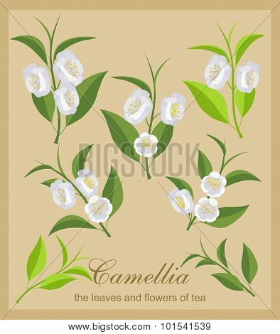 Vector set of isolated flowers and tea leaves.
