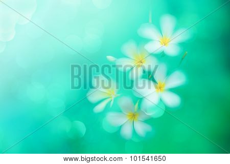 Motion Blur Image With Blooming Plumeria, Soft Focused With Flower