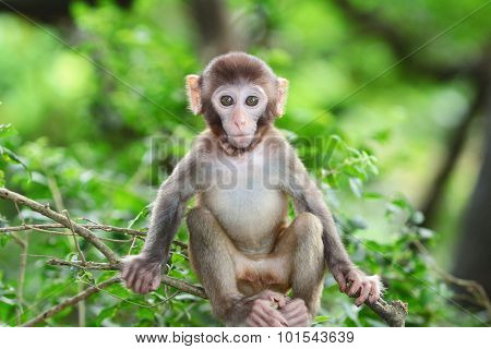 Silly Albino Macaque In Hong Kong