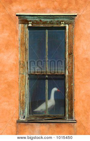 Goose In Window