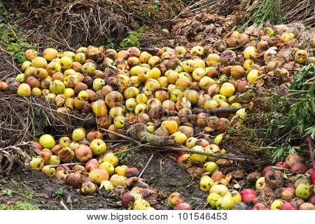 Rotten Green And Yellow Apples With Other Waste
