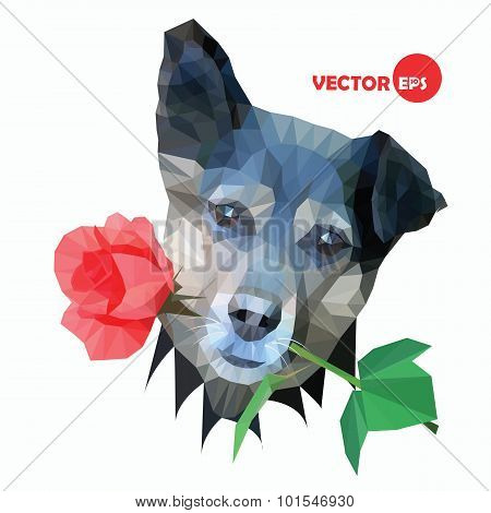 Dog with red rose on white background