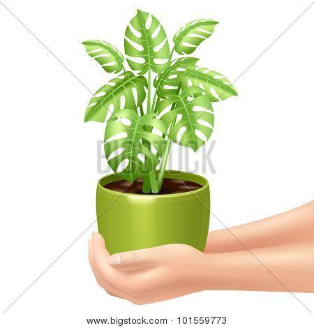 Holding A Houseplant Illustration