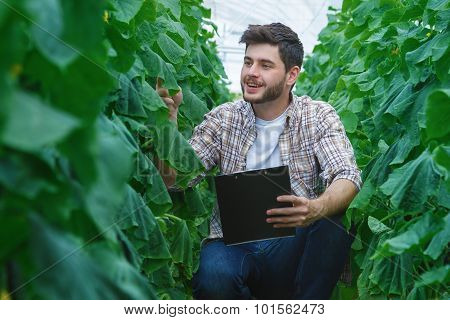 Farmers are growing and harvesting vegetables