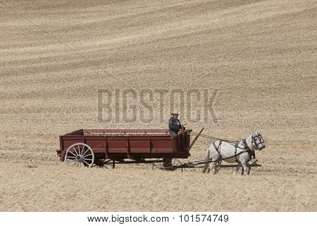 Man Driving Horse Drawn Wagon.