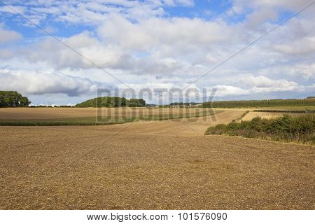 Cultivated Fields In The Yorkshire Wolds