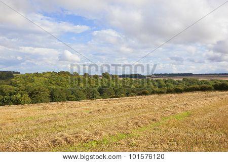 Yorkshire Wolds Harvest