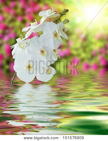 White Orchid On Surface Rippled Of Water And Blur Nature Background