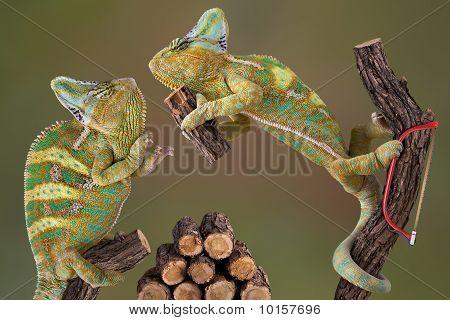 Chameleons Making Firewood