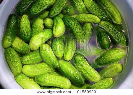 Wash Cucumbers