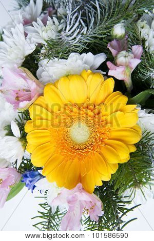 Yellow Gerbera Close Up