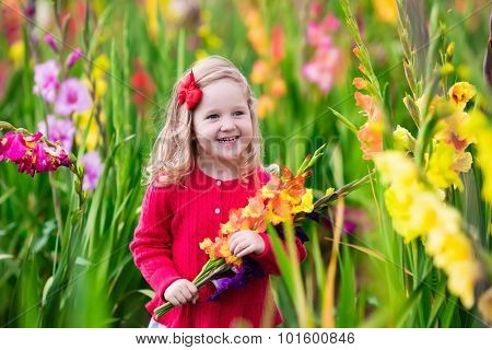 Child Picking Fresh Gladiolus Flowers