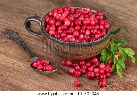 Cowberry Lingonberry cup