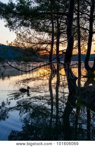 Dawn over lake with silhouette reflection tree