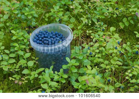 The container with bilberry