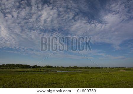 Green Meadow Beneath Summer Skies