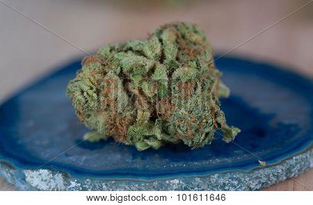 Papaya Medicinal Medical Marijuana