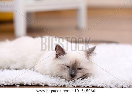 Cute little kitten sitting on white carpet, on home interior background
