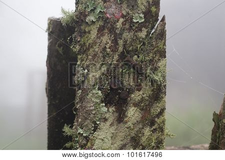 Tree Trunk Close Up