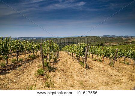 Tuscan Winemaking