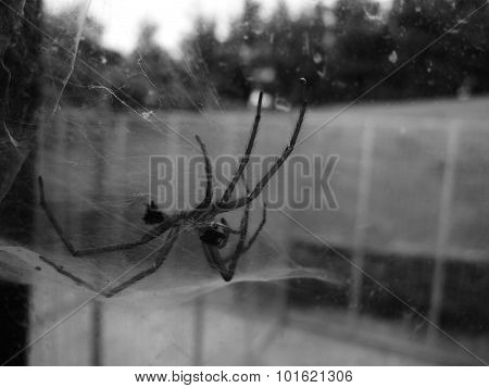spider dead skin web window creepy halloween dreary dark